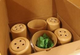 Eko lončki iz bioplastike